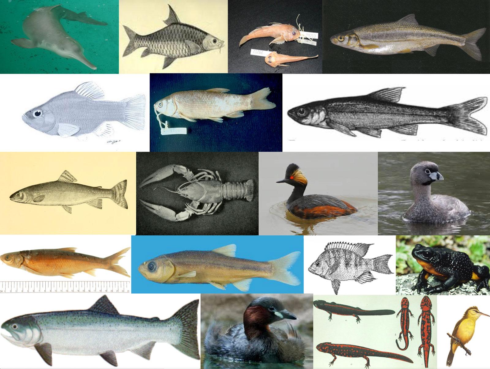 Freshwater Life Saving Endangered Species
