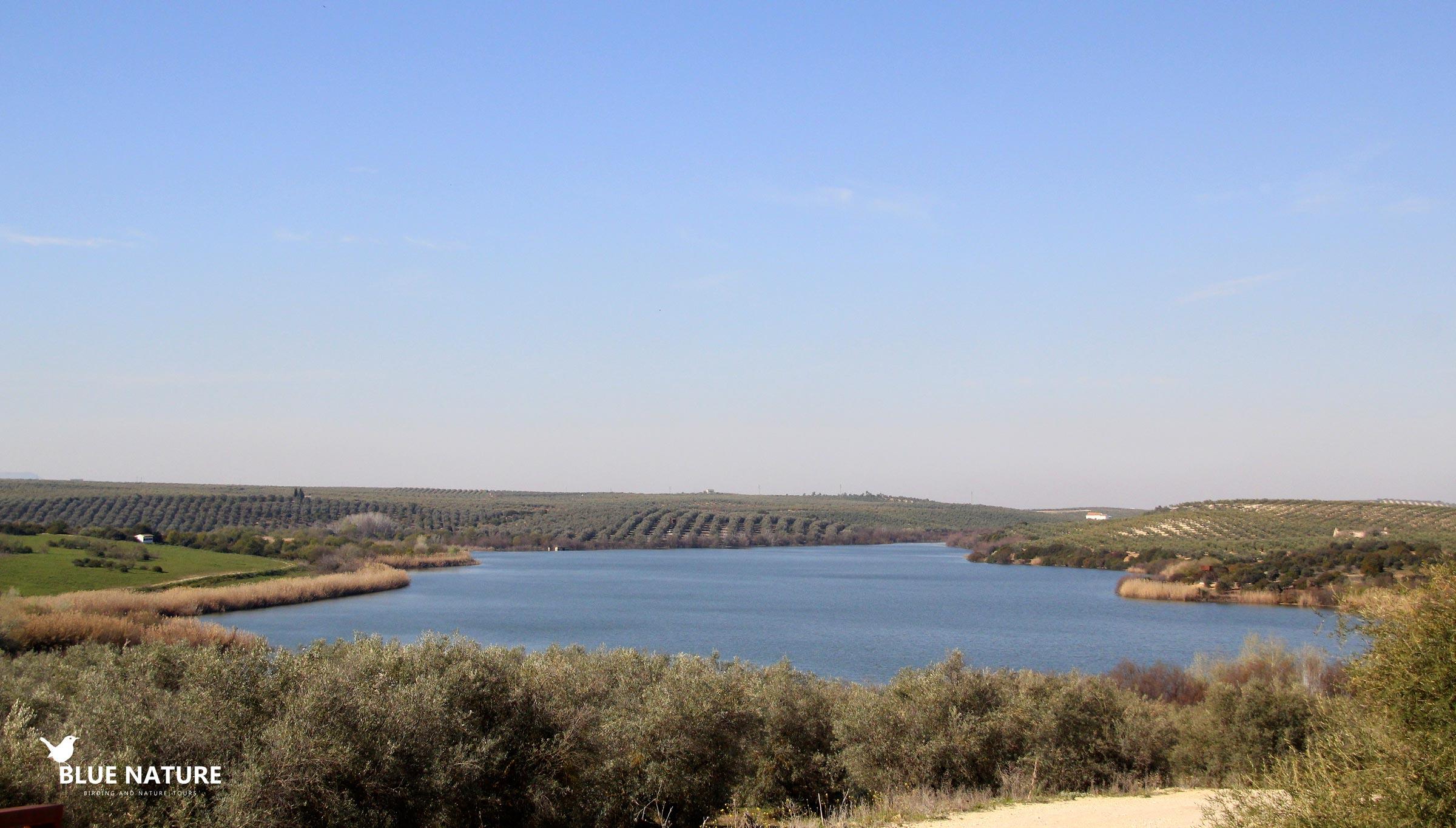 Freshwater Life Clean Lake